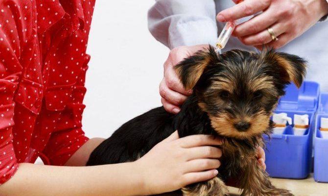 Какие прививки делаются щенкам до года: когда делают первую и последующие