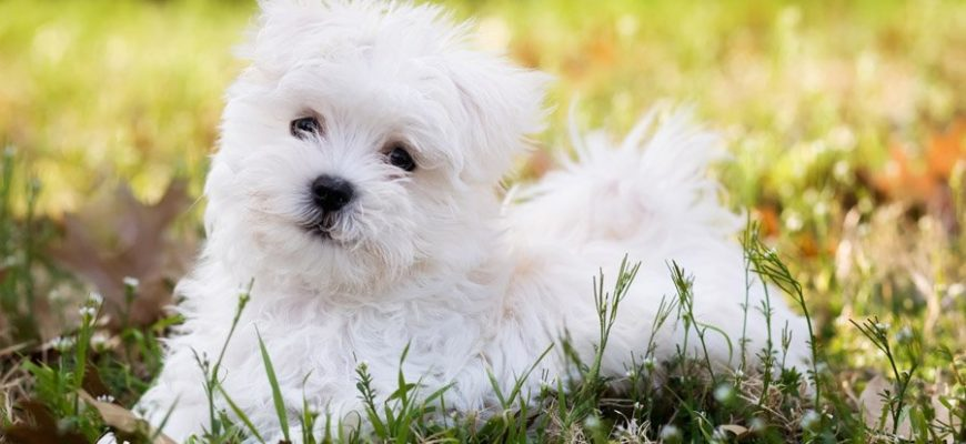 Дрожь задних лап у собаки: причины и лечение тремора конечностей, почему трясутся и дрожат лапы, когда питомец стоит