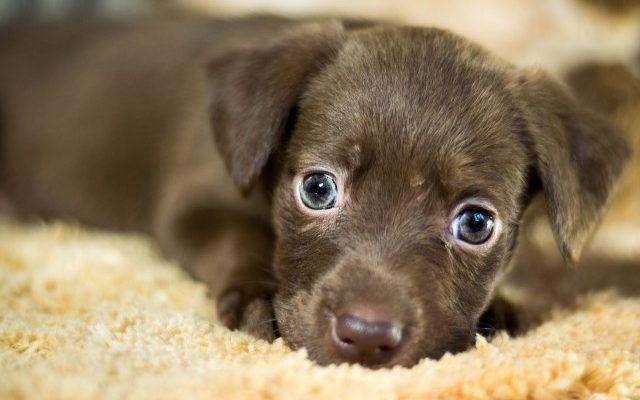 Как определить возраст щенка по зубам фото ⋆ Онлайн-журнал для женщин