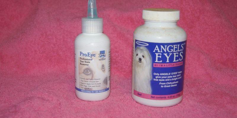 Текут глаза у мальтийской болонки что делать. Несколько советов по уходу за шерстью вокруг глаз Мальтезе - Доктор от аллергии