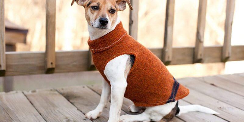 Выкройка комбинезона для собаки: варианты моделей и кроя, фото и видео мк
