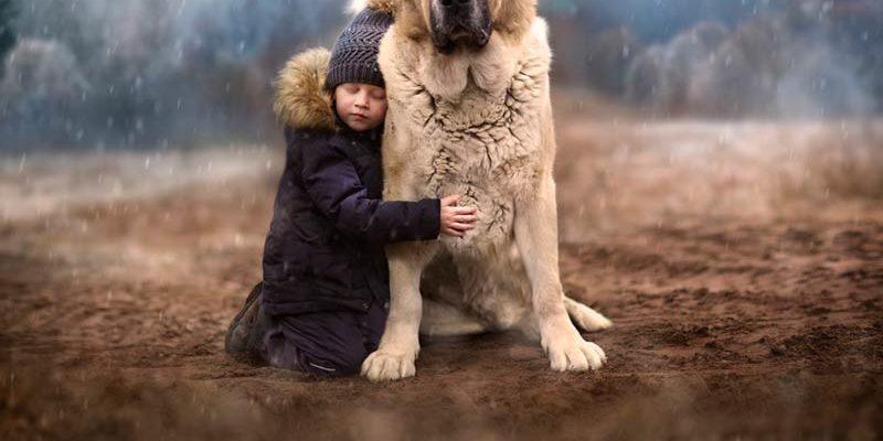 Алабай что за порода собак