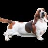 Бассет хаунд – фото собаки, описание породы, цена щенков