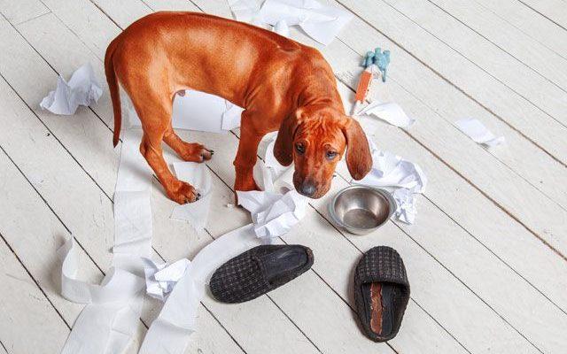 Собака грызет, кусает свой хвост и задние лапы: причины, лечение