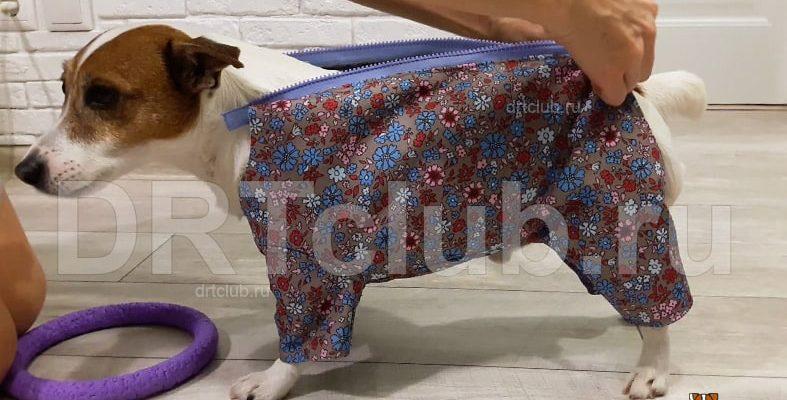 Одежда для маленьких собак своими руками: выкройки и схемы с фото - Сайт о рукоделии