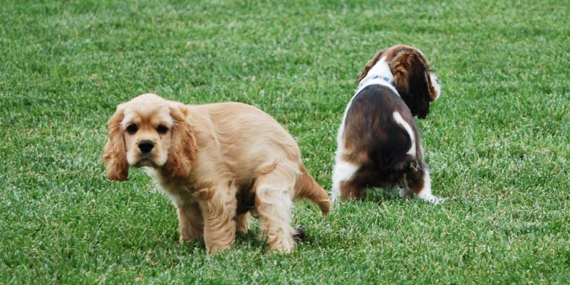Как приучить собаку ходить в туалет на улице: инструкция и рекомендации
