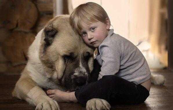 Алабай и другие крупные собаки: кто сильнее и выносливее. Кавказец или алабай: кто сильнее Больше алабай или кавказская овчарка