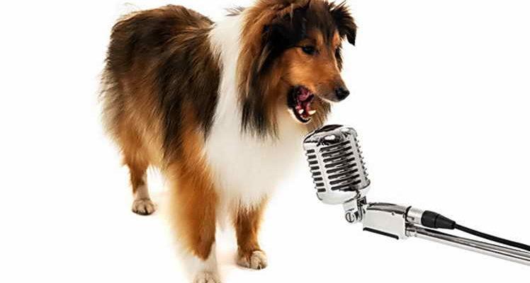 Как легко научить щенка подавать голос — разбираем нюансы и не делаем ошибок ⋆ Собакапедия