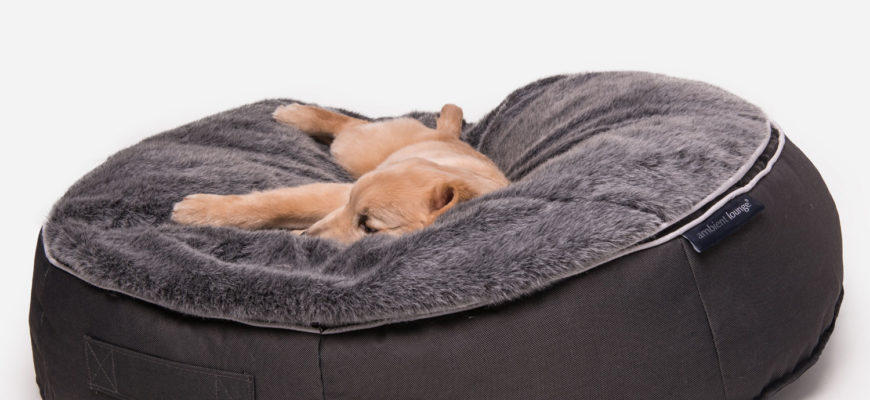 Купить лежанку для собак - как выбрать лежак?