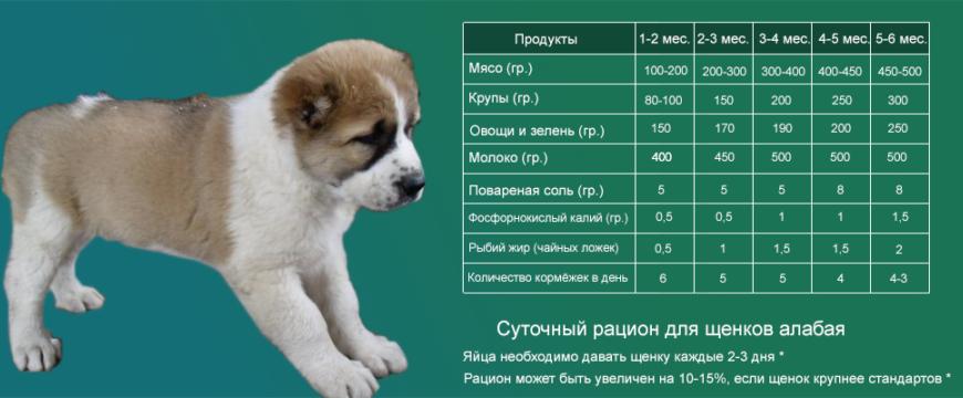 Как кормить щенка алабая 1 месяц: сколько ест алабай?