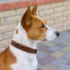Купить беговой намордник для собак в интернет магазине  | Доставка по СПб и всей России недорого
