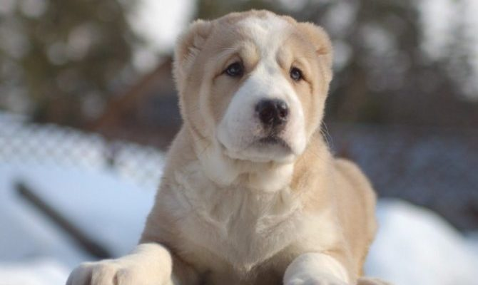 Сильно линяет собака: что делать и как с этим бороться?