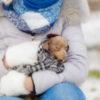 Насморк у собак: причина проблемы, варианты лечения | Vetera