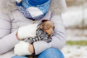 Насморк у собак: причина проблемы, варианты лечения   Vetera