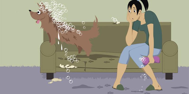 Все собаки воняют псиной