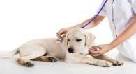 Артрит у собак – симптомы, причины и лечение