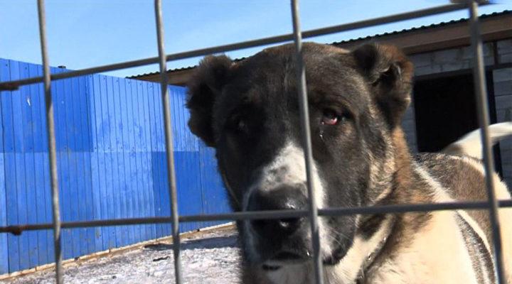 Жестокое кровопролитие: полиция изучает видео с собаками