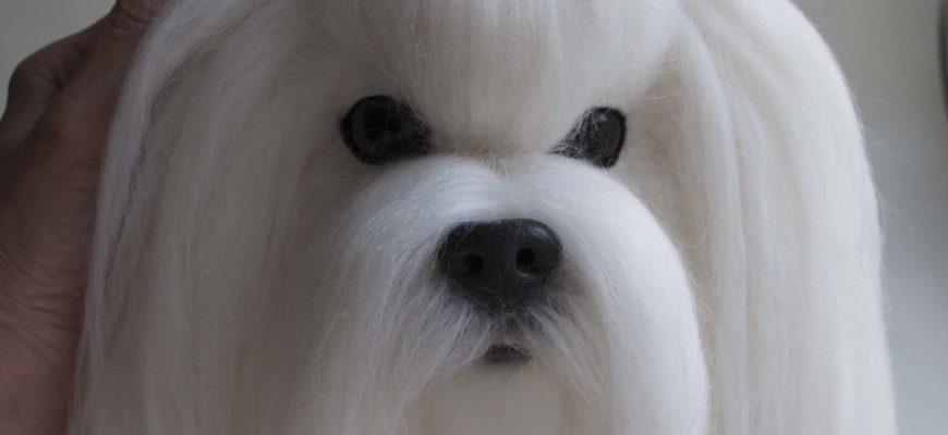 Панно собаки болонка мальтезе – заказать на Ярмарке Мастеров – DPCINRU   Картины, Нижний Новгород