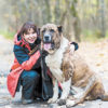 """Спасти брошенных алабаев: """"Собаки прибывают с пугающим постоянством""""     - МК"""