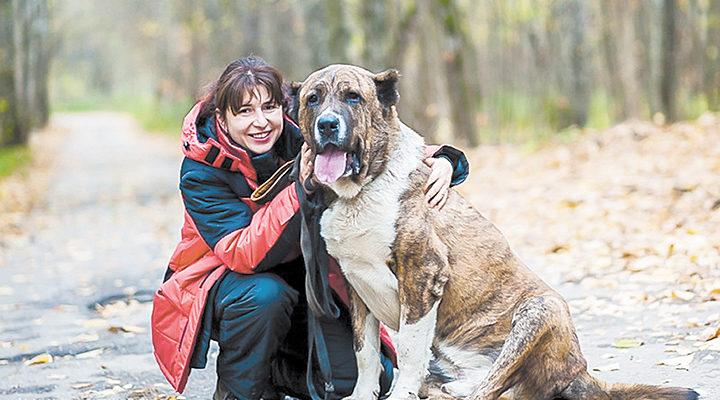 Алабай и Найдена собака: истории из жизни, советы, новости, юмор — Горячее   Пикабу