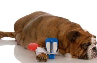Измерение артериального давление у собак и кошек