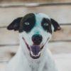 Смена зубов у собак: рекомендации ветспециалистов |  Ветеринарная служба Владимирской области