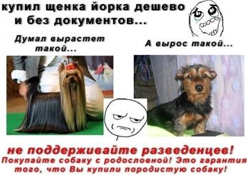 Глисты у собак: признаки, симптомы, лечение | Vetera
