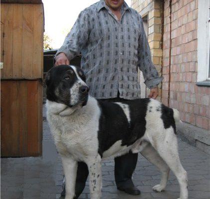 Собаки Средней Азии