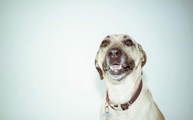 Немного о хорошей амуниции для собак и их хозяев | Городская собака