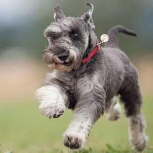 Что делать если на тебя бежит алабай   Play Dogs