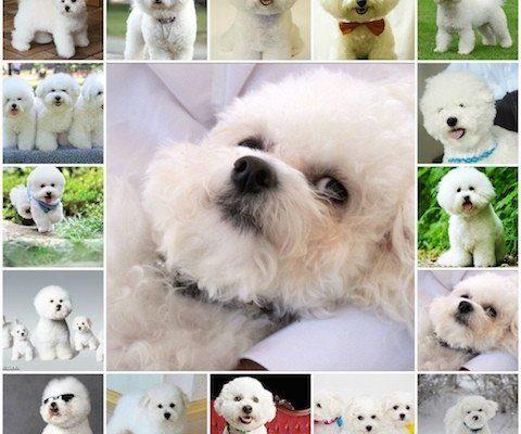 Любители собак, поддержите..... Домашние животные