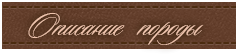 Рыжий бретонский бассет: фото, описание породы, история, уход