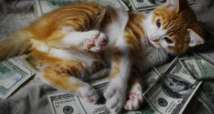 В США умерла собака-миллионер - Журнал Деньги