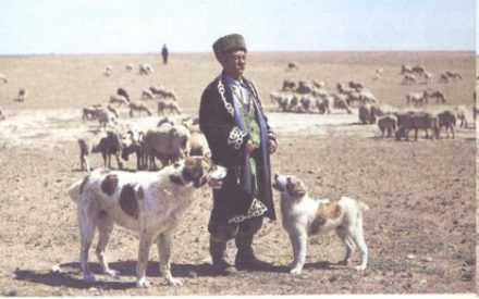 Алабай и среднеазиатская овчарка отличия - ЗОО Журнал
