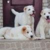 Собака худеет: что делать, чем кормить, причины, лечение. |  Ветеринарная служба Владимирской области