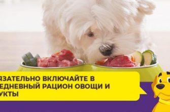 Все собаки чем кормить болонку