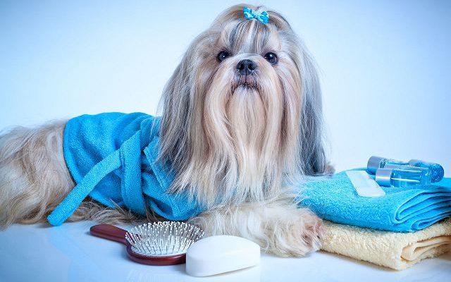 """Перхоть у собаки почему, причины и лечение   Блог ветклиники """"Беланта"""""""