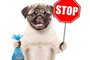 Что делать, когда у собаки понос? | Зоомагазин Сытая Морда