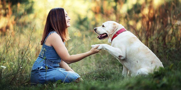 Самые популярные клички собак, список 3000 лучших кличек