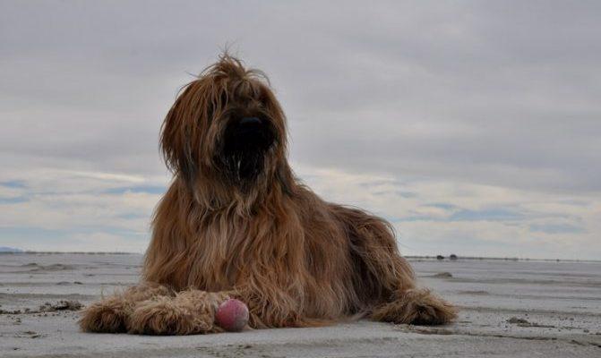 Колтунорезы для собак: купить с доставкой на дом и в ПВЗ в интернет-магазине Бетховен
