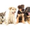 Красивые клички для собак мальчиков басенджи