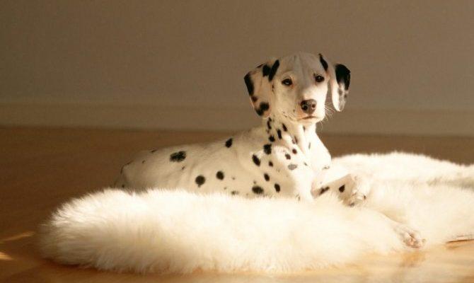 Клички для собак девочек маленьких пород: 701 прикольных английских и русских имён на 2021 год