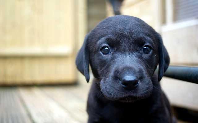 """Почему собака отказывается есть?   Блог ветклиники """"Беланта"""""""