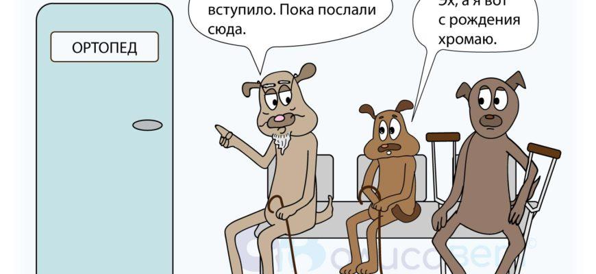 """Хромота у собак: симптомы, диагностика   Блог ветклиники """"Беланта"""""""