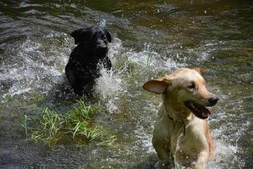 Неприятный запах от собаки: должна ли пахнуть собака, источники запаха, правила гигиены, как избавиться от запаха – про собак от А до Я на