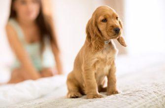 Как отучить собаку лаять дома: 12 способов отучить собаку гавкать на всех подряд