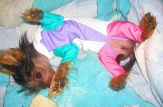 одежда для собак болонки купить по низкой цене на Aliexpress