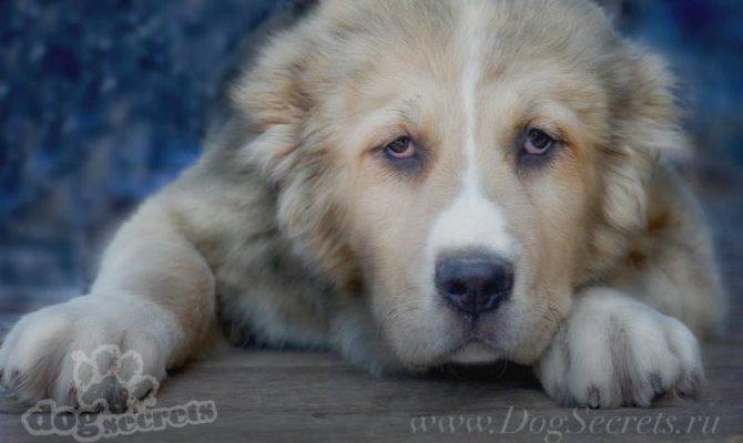Имена для собаки девочки басенджи